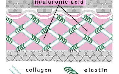 Peek Behind The Curtain Of Hyaluronic Acid